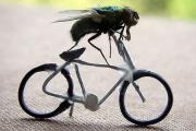 mountainbike madrid